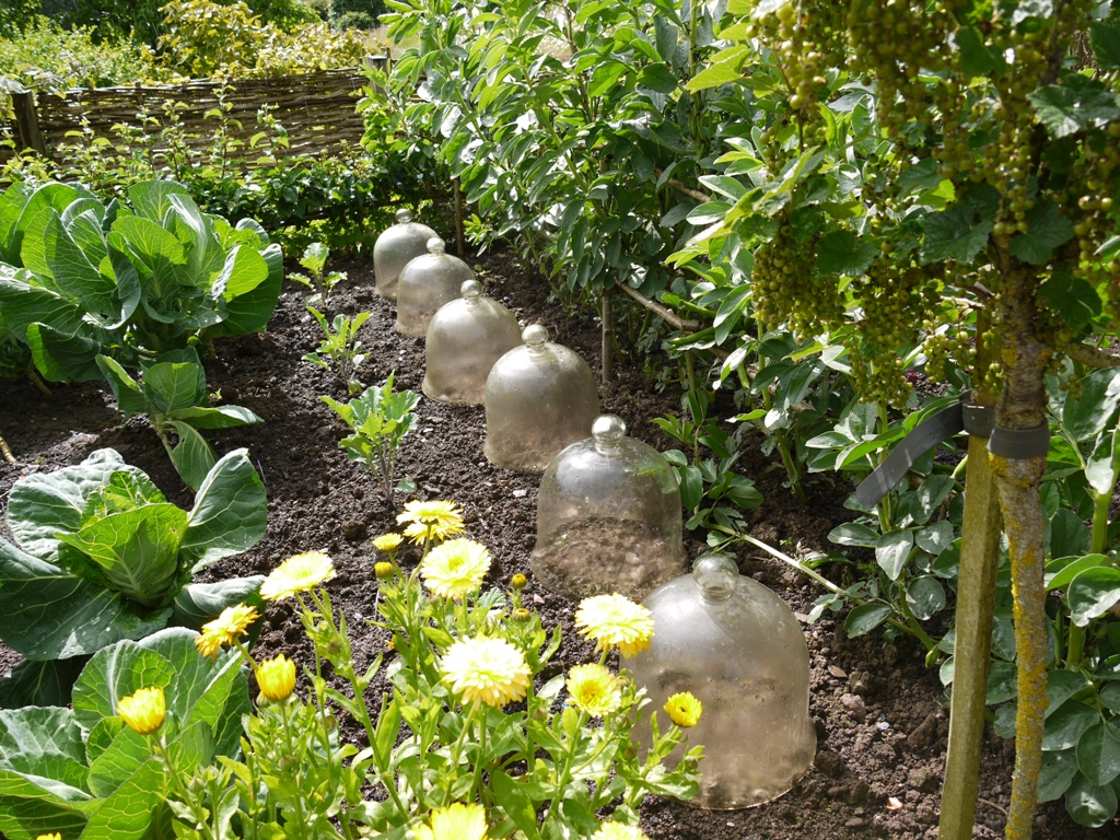 Arn Maynard's exquisite vegetable garden